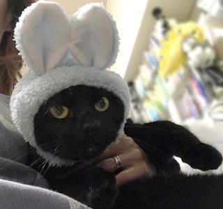 秋葉ネオ管理人の家族猫